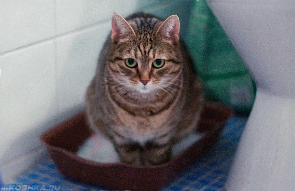 Фталазол коту дозировка