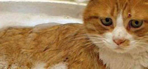 Купаем рыжую кошку в тазике с шампунем