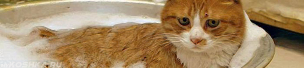 Купать кошку в домашних условиях 527