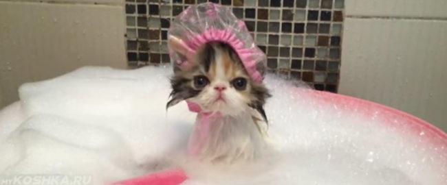 Купание котёнка с шампунем