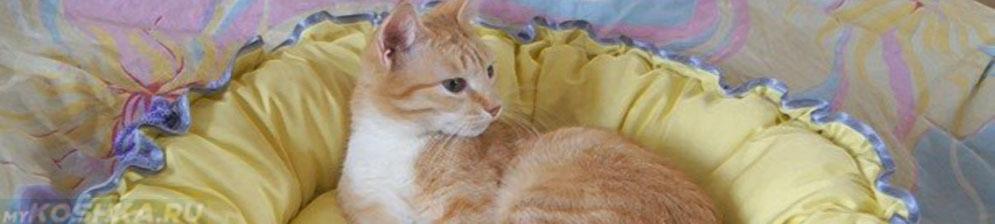 Лежанка для кошки сделанная своими руками из ткани