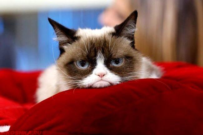 Обиженный кот сидит на красном диване