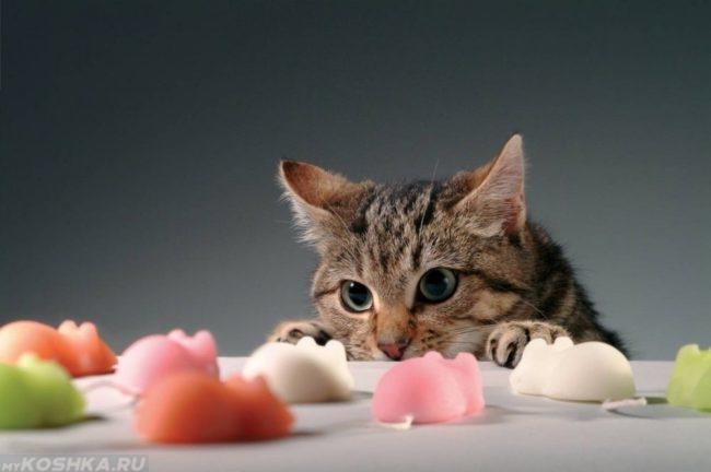 Кот смотрит на пластмассовых мышат