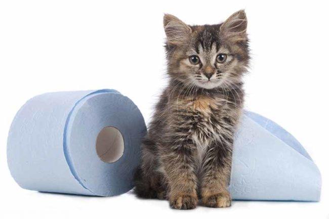 Котёнок рядом с туалетной бумагой
