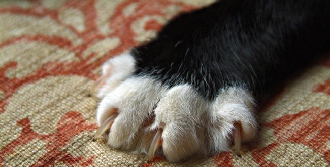 Кошка дерёт когтями диван