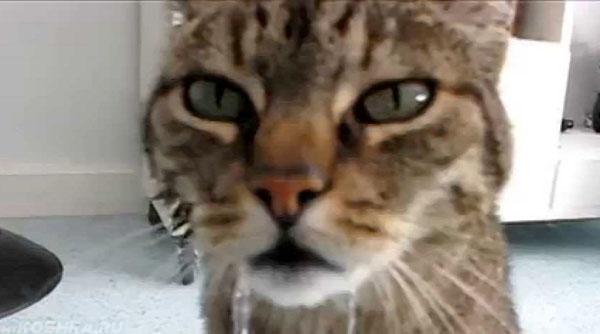 Обильные слюни у кошки на морде вид спереди