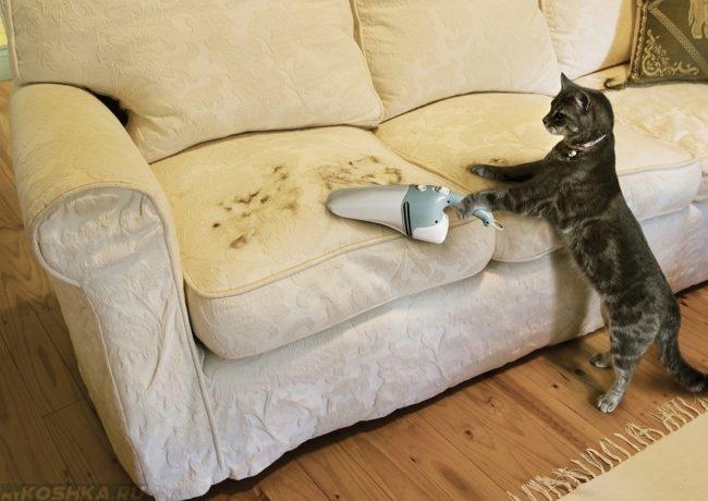 Кошка пылесосит шерсть на диване с светлой тканью