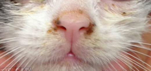 Ринотрахеит у котёнка на руках у челвоека
