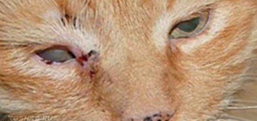 Ринотрахеит у рыжей кошки вблизи