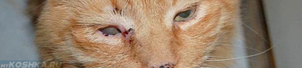 Ринотрахеит у кошек и котов: симптомы и лечение