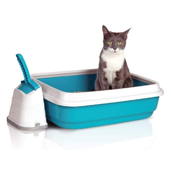 Серо-белый кот сидит на двухцветном лотке