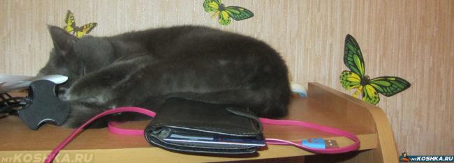 Стерилизованная кошка спит где попало