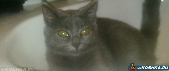 Сухой нос у кошки при повышенной температуре