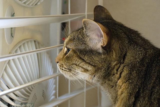 Кот смотрит на белый вентилятор