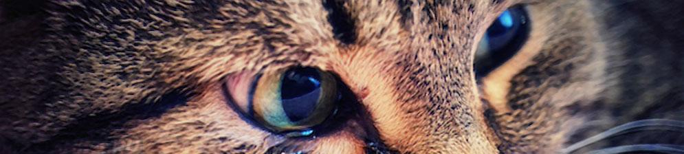 У кота слезится глаз и чихает чем лечить в домашних условиях