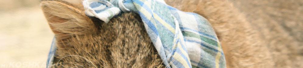 Ухо у кошки сильно болит и завязано в платок