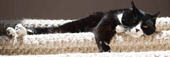 Вялая кошка спит несколько дней