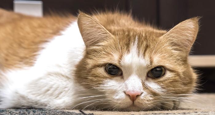 Кот не ест и не пьет и не ходит в туалет вялый