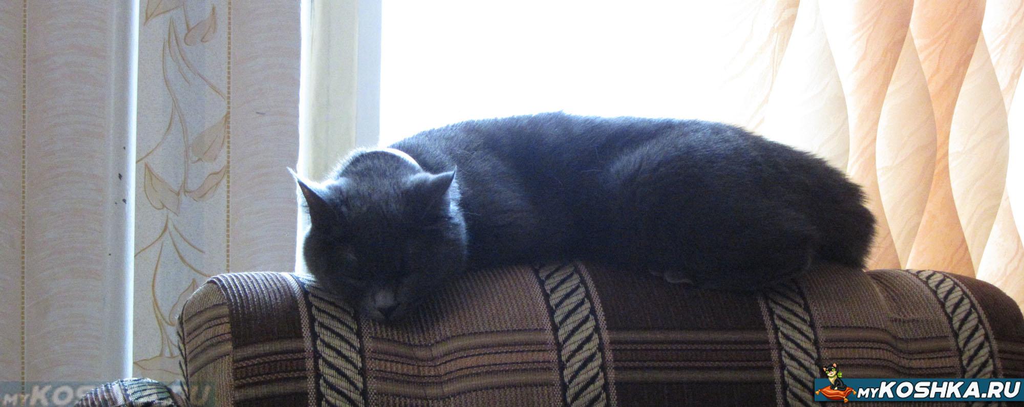 схема лечения поноса у кошки