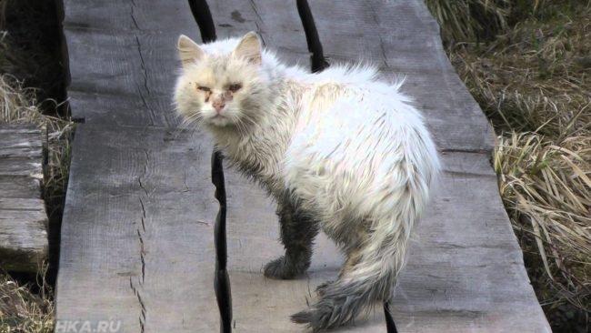 Облезлая и больная кошка
