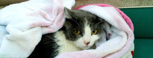Кошка завёрнутая в полотенце