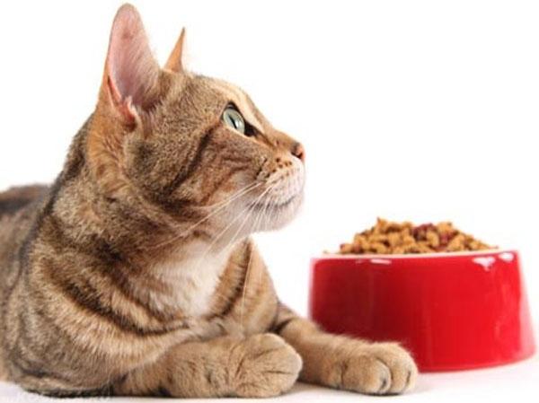 Кот лежит рядом с красной миской