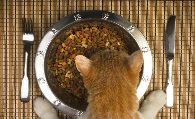 Рыжий кот ест премиум-корм из серебряной миски