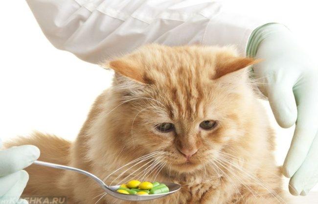 Рыжему пушистому коту подносят к морде таблетки в ложке