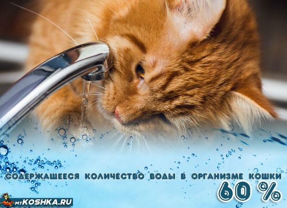Соотношение воды в организме здоровой кошки