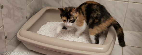 Диарея у кошки