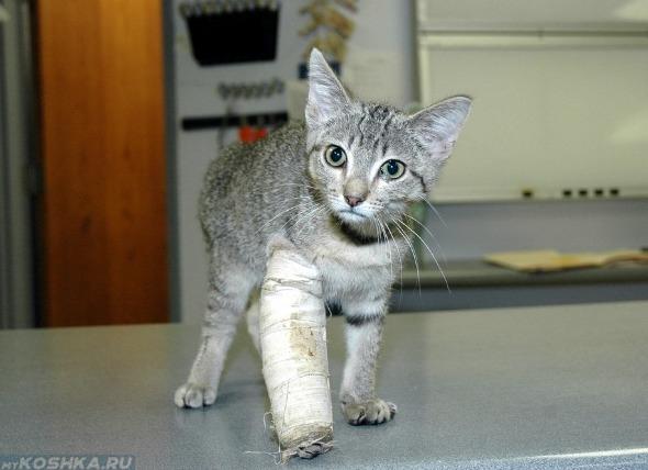 Фиксация лапы котёнка при переломе