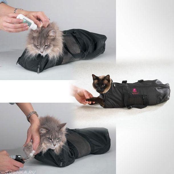 Три кота зафиксированы черным воротником