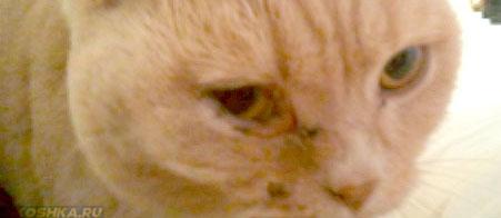У кошки болит глаз