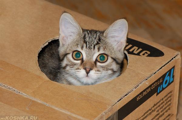 Кот играется с игрушкой из коробки