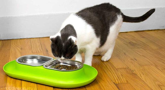 Кормление кошки при рвоте маленькими порциями