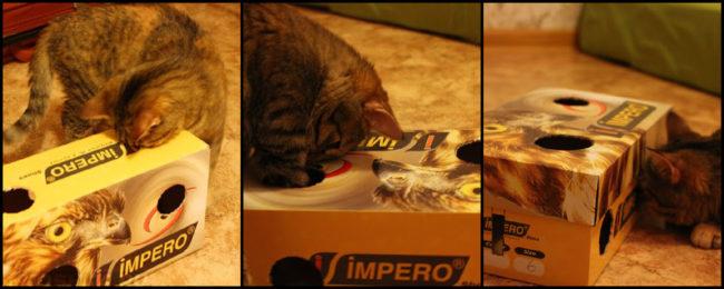 Игрушка для кошки из коробки под обуви для кошки