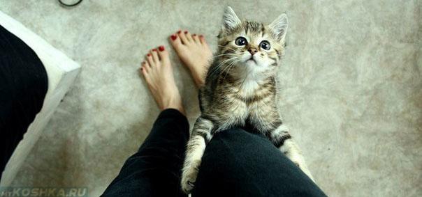 Кошка лезет на человека