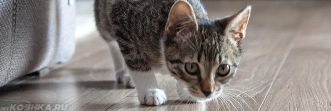 Кошка кашляет пригнув голову к полу