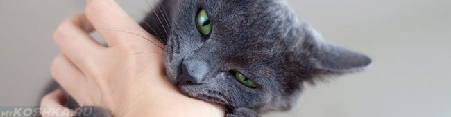 Кошка без когтей сильно кусает руку хозяина