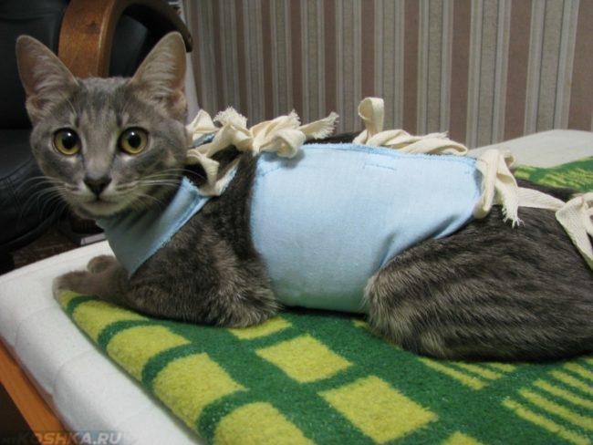 Серая полосатая кошка с перевязанным животом лежит на зеленом одеяле