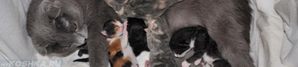Как принять роды у кошки в домашних условиях