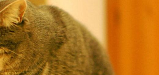 Кошка рыгает сразу после еды рядом с миской