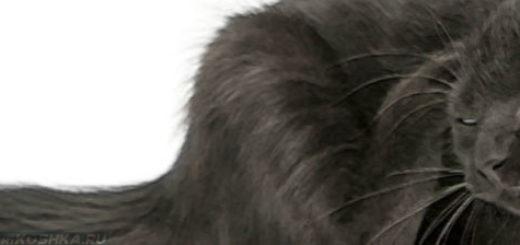 Кошка чешет за ухом