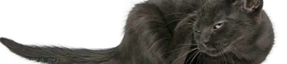 У кота чешутся уши чем лечить