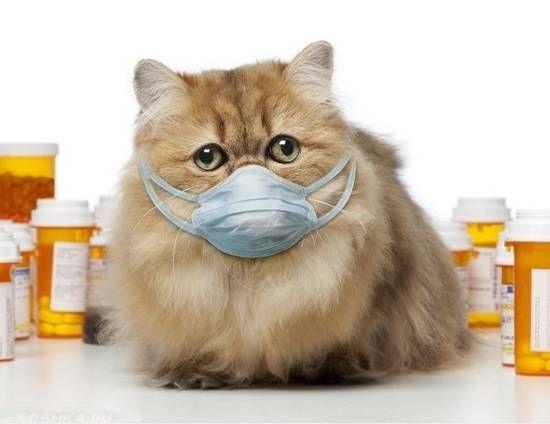 Пушистая рыжая кошка в маске