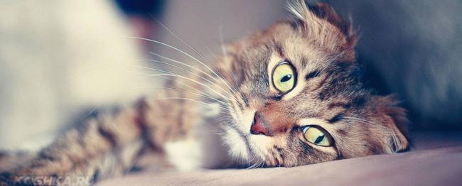 Больная кошка и лежит не двигается
