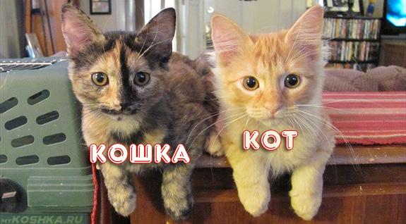 Рыжий кот и трёхцветная кошка в 1 месяц