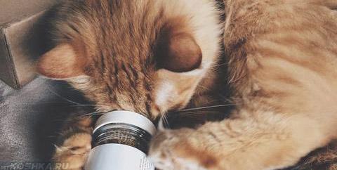 Кот пробует открыть валерьянку