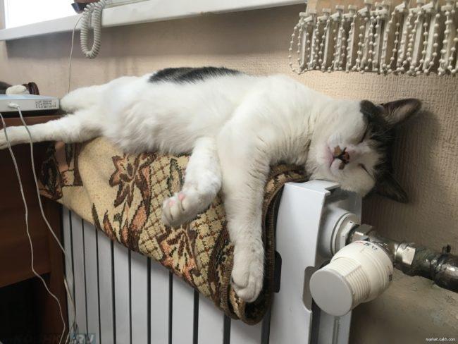 Белый кот с серым пятном спит на белой батарее под подоконником