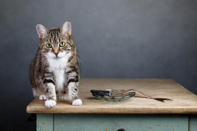 На столе кот и миска с рыбой